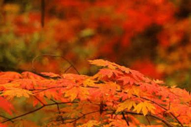 hirosakikouenn-kouyou