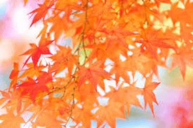 harunako-kouyou