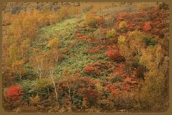 nasukougenn-kouyou