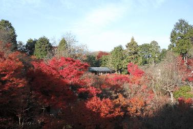 toufukuji-kouyou