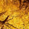 六義園の紅葉2016の見頃と見どころは?日本庭園と紅葉をライトアップ!