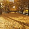 昭和記念公園の紅葉2016の見頃と見どころ、アクセス方法は?