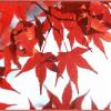 箕面公園の紅葉2016の見頃は?もみじの天ぷらが食べられる!?