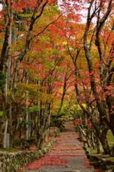 keisokuji-kouyou