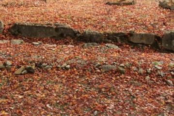 fukuoka-kouyou