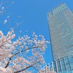 東京の桜名所2017開花はいつ?見頃やおススメスポットをご紹介!
